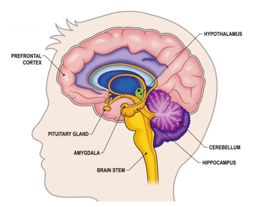 Music and brain development